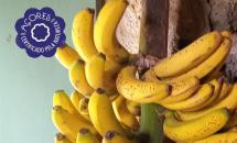 Bananas da Ilha